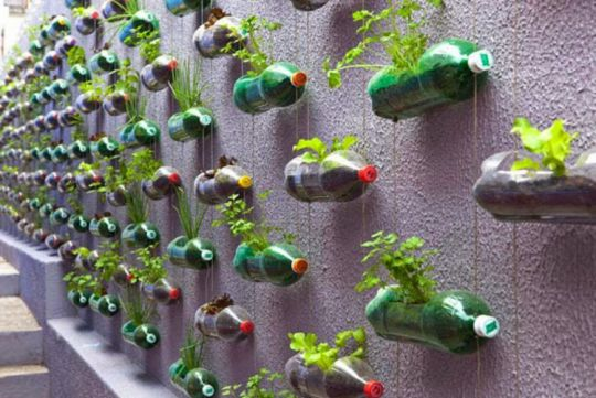 cara-membuat-kebun-vertikal-dari-botol-bekas