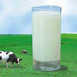 seekor-sapi-menghasilkan-sekitar-200-000-gelas-susu-dalam-hidupnya