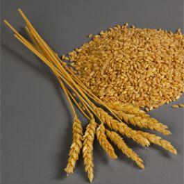 menurut-penelitian-yang-dimuat-di-journal-of-nutrition-mengonsumsi-gandum-utuh-membantu-mengurangi-lemak-tubuh-dan-lemak-perut