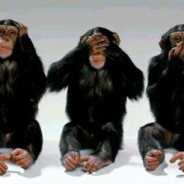 sepertiga-bahasa-tubuh-dari-hewan-simpanse-sama-dengan-manusia-menurut-peneliti-dari-university-of-stirling-skotlandia