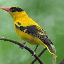 jantung-seekor-burung-berdetak-400-kali-per-menit-saat-beristirahat-dan-sampai-1000-kali-per-menit-sambil-terbang