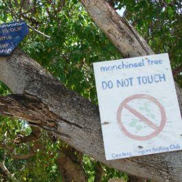 pohon-manchineel-ini-dianggap-sebagai-pohon-paling-beracun-di-dunia-dan-masuk-dalam-guiness-records