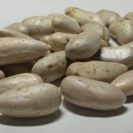 biji-nangka-pun-baik-digunakan-sebagai-bahan-terapi-penyakit-kulit-dan-mengatasi-stres-rutin-makan-biji-nangka-juga-menjaga-kulit-tetap-lembab-alami
