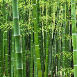 bambu-memiliki-kekuatan-yang-lebih-besar-daripada-baja