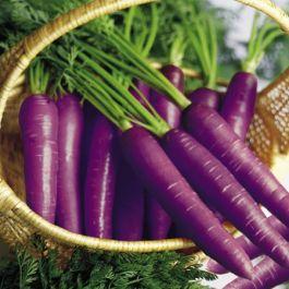 tahukah-kamu-sebelum-abad-17-sayuran-wortel-berwarna-ungu