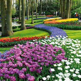 taman-keukenhof-atau-lebih-dikenal-sebagai-taman-eropa-di-lisse-belanda-mempekerjakan-sekitar-30-tukang-kebun-dan-dianggap-sebagai-taman