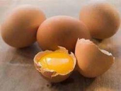 Telur Bantu Perkembangan IQ Anak