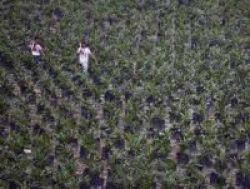 Didik Tenaga Perkebunan, Deptan Siapkan Rp 12,5 Miliar