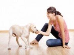 Mencegah Infeksi Akibat Gigitan Anjing
