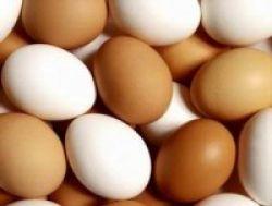 Trik Makan Telur Tiap Hari Tanpa Khawatir