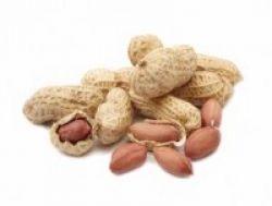 Kacang, Sahabat Empedu