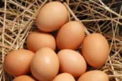 Telur Ayam Kandang Lebih Sehat