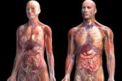 Gambar 3-D Ampuh Temukan Penyebab Kanker