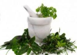 Ini Lho Potensi Obat Herbal di Indonesia