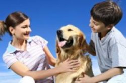 Anjing Kurangi Stres Anak Autis