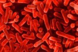 Bakteri Legionella Menyebar Lewat Udara