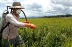 Pengguna Pestisida Berisiko Besar Idap Parkinson
