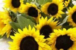 Manfaatkan 7 Khasiat Bunga Agar Sehat