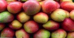 Langsing Tanpa Diet dengan Mangga Afrika