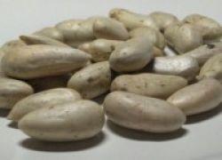 Mahasiswi UNY Ubah Limbah Biji Nangka Jadi Yogurt