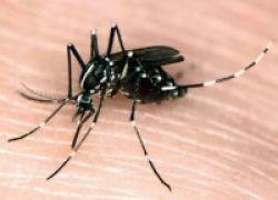 Cara Tepat Usir Nyamuk Demam Berdarah