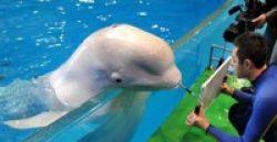 Terapi Lumba-Lumba Tidak Lebih Baik