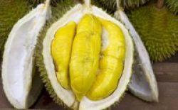 Durian, Lezat dan Bergizi Tinggi