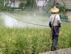 Pestisida Turunkan IQ