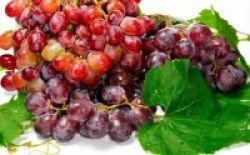 Anggur, Pelindung Kulit dari Sinar UV