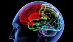 Kurangi Makan Memacu Otak dan Daya Ingat