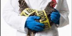Kasus Terduga Flu Burung Muncul Lagi