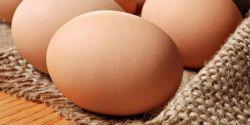 5 Alasan Pentingnya Makan Telur