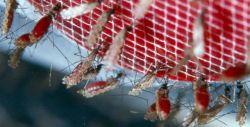 Cara Aman Bepergian ke Daerah Endemis Malaria
