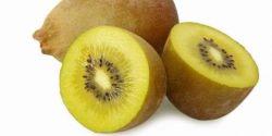 Kiwi, Si Mungil Sahabat Usus