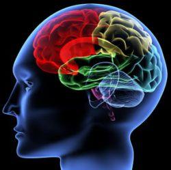 Kenali Tipe Kecerdasan Otak Anda