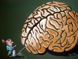 Otak Besar = IQ Tinggi?