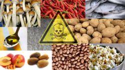 Duh, Ternyata Makanan Pokok Kita Berbahaya untuk Kesehatan!