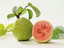 Sejuta Manfaat Jambu Biji bagi Kesehatan