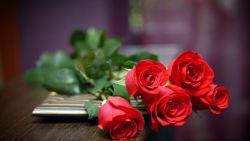 Mawar, Si Cantik dengan Berbagai Manfaat