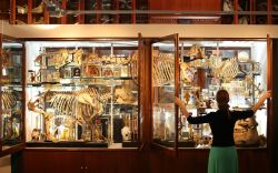 Memanfaatan Museum sebagai Sumber Pembelajaran
