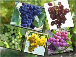 Cegah Kanker dan Jantung Sehat, Jus Anggur Solusinya