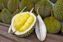 Bahaya Makan Durian Berlebihan