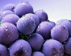 Blueberry Bermanfaat Tingkatkan Kinerja Otak