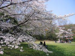 Mau Beasiswa Riset Studi Jepang di London? Cekidot!
