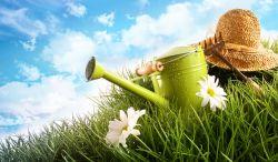 Dapatkan 5 Dampak Positif Hanya dengan Berkebun