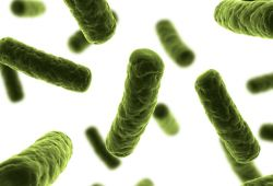 Inilah 5 Tempat Favorit yang Disukai Bakteri di dalam Rumah Anda