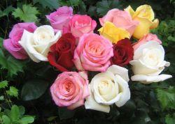 Sejuta Khasiat Bunga Mawar