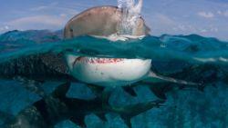 Film Sharknado Segera Dapatkan Video Game Spin-Off Bulan Juli Ini