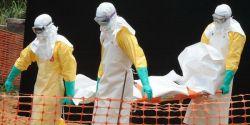 Mengenal Lebih Jauh Virus Ebola - Bagian 2