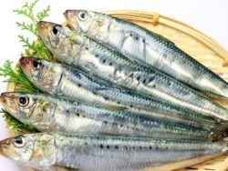 Manfaat Ikan Sarden untuk Tubuh dan Otak